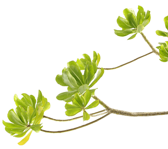插圖 - 樹枝
