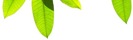 插圖 - 樹葉